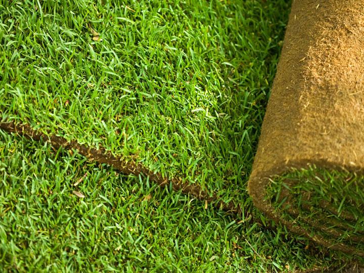 Welke grassoort kies je best voor een gazon woonmooi - Geplaveid voor allee tuin ...