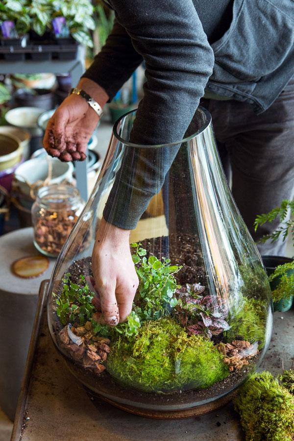 planten voor terrarium