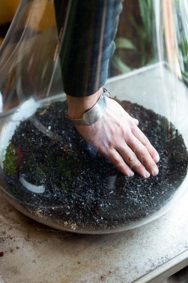 steenkool terrarium