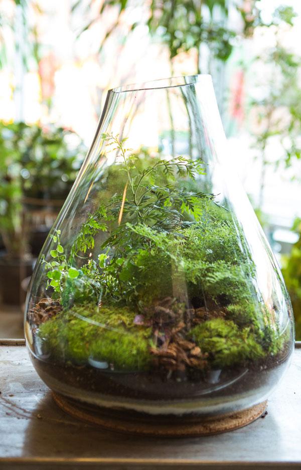 zelfgemaakt terrarium