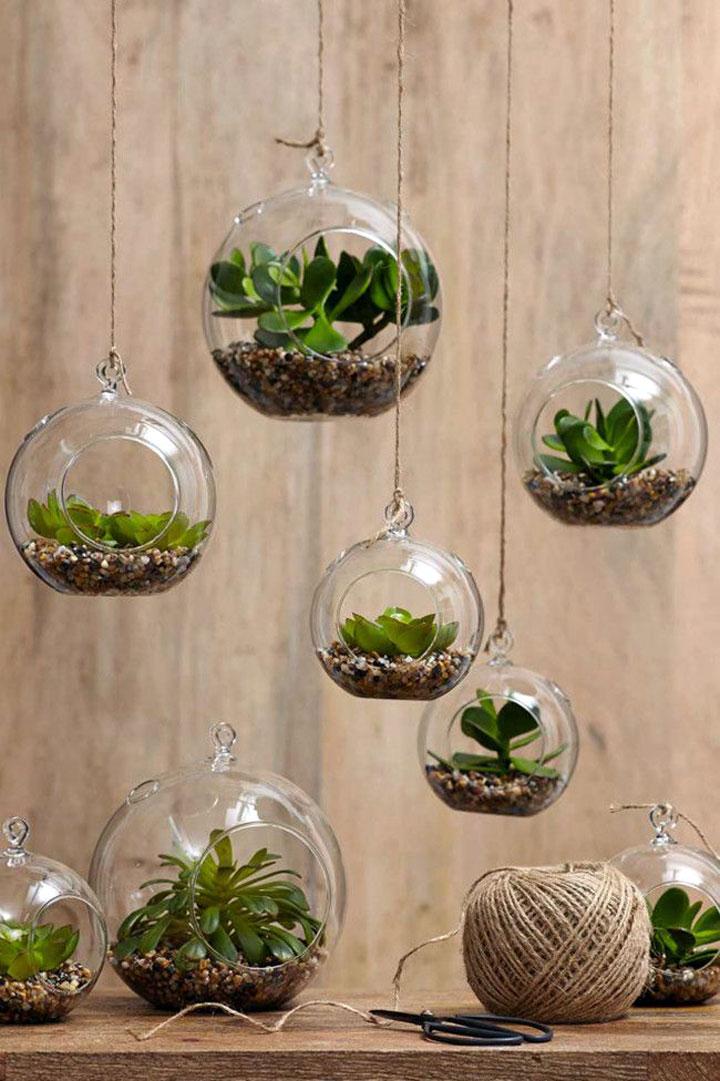 hangend terrarium met vetplantjes