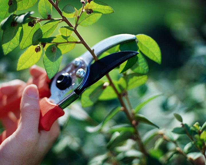 takken snoeien tuin zomerklaar maken