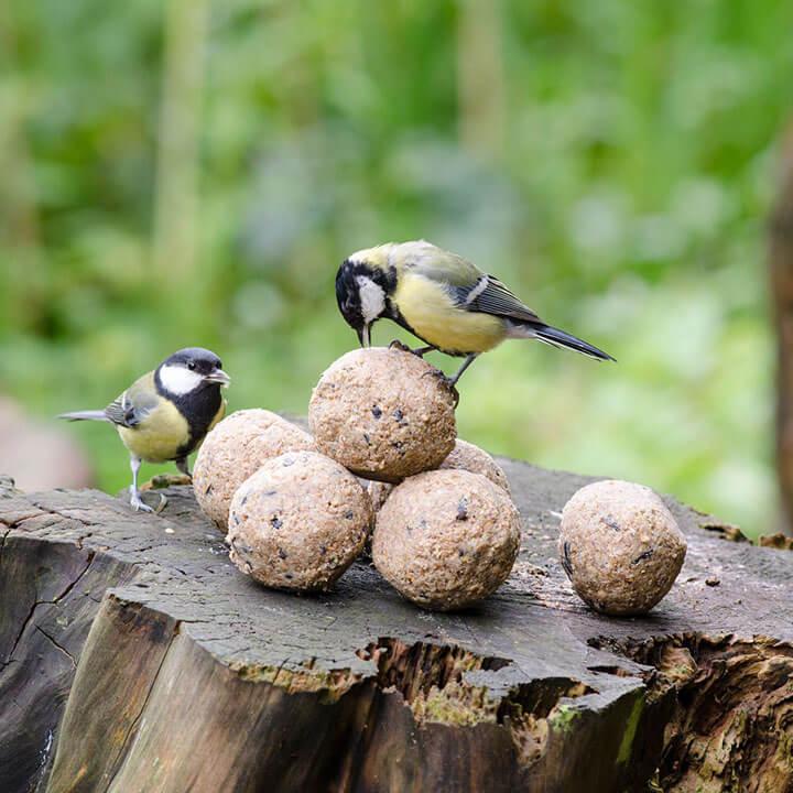 mezenbollen vogels winter