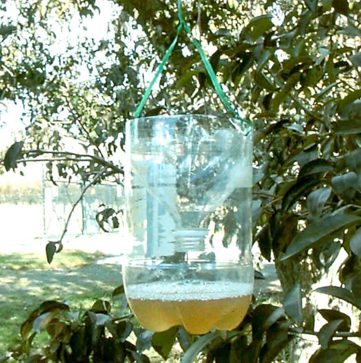zelfgemaakte wespenval van plastic fles